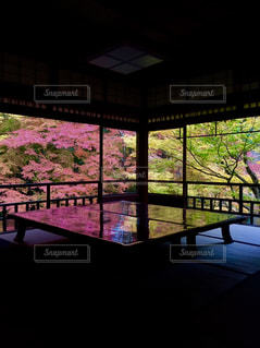 窓いっぱいの紅葉の写真・画像素材[1597734]