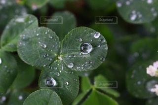 雨,水滴,草,滴る,雫