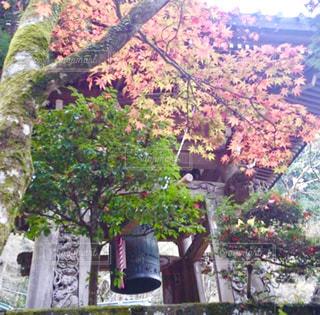 森林,屋外,水面,景色,鮮やか,樹木,日中,色・表現