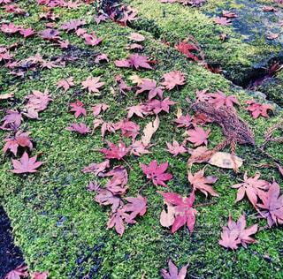 屋外,景色,草,樹木,草木,日中,色・表現