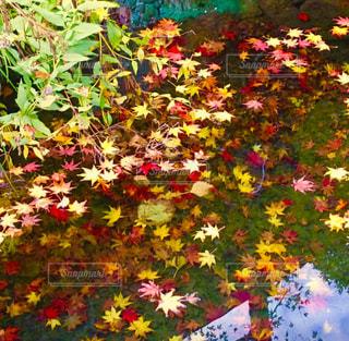 カラフルなフラワー ガーデンの写真・画像素材[1602460]