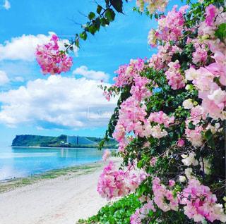 風景,空,ビーチ,景色,パーム,ガーデン