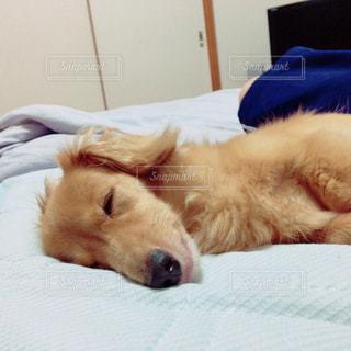 犬の写真・画像素材[472850]