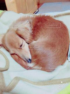 犬の写真・画像素材[472857]