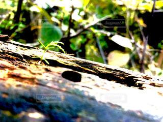 森林,屋外,緑,林,山,樹木,杉,希望,暖かさ