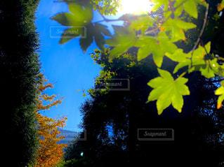 秋,紅葉,緑,青空,山,滋賀県,米原市,霊山,醒ヶ井