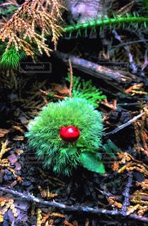 苔玉で一休みする赤い小悪魔?の写真・画像素材[1673844]