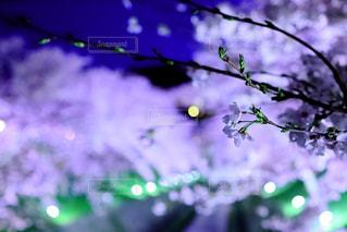 春の薄暮に想う…の写真・画像素材[2002618]