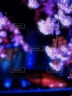 花,春,桜,夜景,夜桜,サクラ,ぼかし,ハナ,琵琶湖ホテル