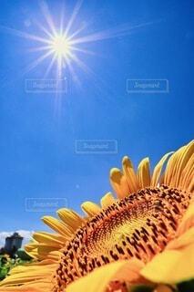 太陽に憧れての写真・画像素材[4657302]