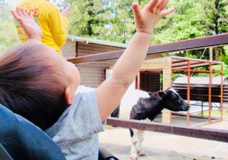 牛を見てよろこぶ子どもの写真・画像素材[1603649]