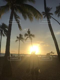 30代,海,海水浴,南国,椰子の木,夕暮れ,男,ハワイ,夕陽,パラダイス