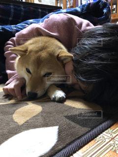 ベッドの上に横たわる犬の写真・画像素材[1745902]