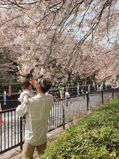 男性,桜,お花見,鯉のぼり,おじいちゃん,男の子,1歳,孫