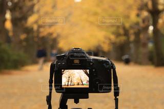 自然,秋,東京都,昭和記念公園,11月,黄葉,いちょう,フォトインフォト,昭島市
