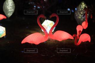 近くに赤い花のアップの写真・画像素材[1800175]