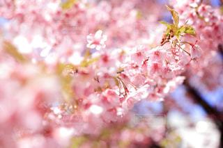 近くの花のアップの写真・画像素材[1842732]