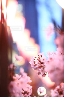 花がぼやけてをクローズ アップの写真・画像素材[1885966]