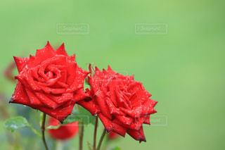 花の写真・画像素材[2163443]