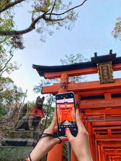 秋,京都,赤,鳥居,観光,旅行,日本,伏見稲荷,フォトジェニック