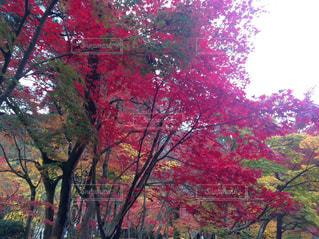 自然,秋,紅葉,京都,緑,赤,黄色,もみじ,12月,永観堂