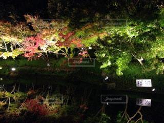 自然,紅葉,緑,赤,黄色,もみじ,三重,桑名市,なばなの里,11月