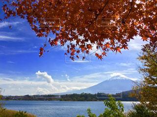 自然,秋,富士山,紅葉,もみじ,旅行,japan,ドライブ,インバウンド,グラデーション,河口湖,mt.fuji,オータム
