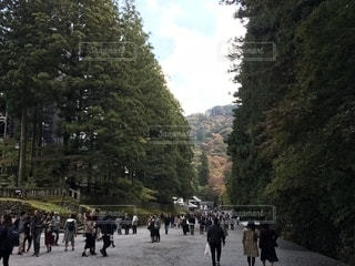 紅葉,屋外,樹木,旅行,草木,レジャー・趣味