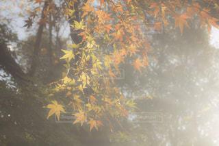 公園,秋,紅葉,屋外,散歩,景色,樹木,未来,ポジティブ,草木,日中,可能性