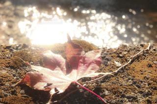 秋,紅葉,京都,赤,川,観光,11月