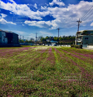 空き地と雑草と空の写真・画像素材[2432329]