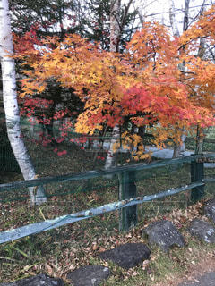 自然,紅葉,屋外