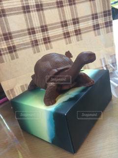 チョコレート,バレンタイン,チョコ,面白い,亀,バレンタインデー,食べづらい,かめ,リアル