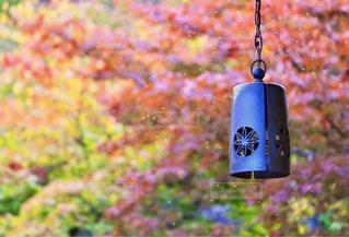 自然,秋,紅葉,庭園,箱根,11月,箱根美術館,モミジ,色・表現