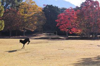 自然,秋,紅葉,元気,鹿,早朝,Autumn,奈良公園,奈良県,11月,奈良市,モミジ
