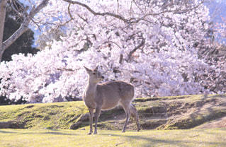 日本の春🌸の写真・画像素材[2001366]