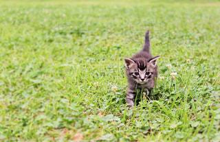 子猫の写真・画像素材[2292181]