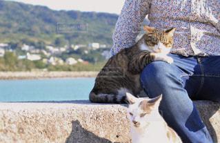 座っていると野良猫ちゃん達に囲まれました…の写真・画像素材[2417149]