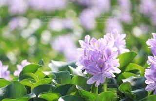 花をクローズアップするの写真・画像素材[2781830]
