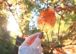 空,ネイル,太陽,手,葉,木漏れ日,光,落ち葉,樹木,グラデーション,草木,カエデ