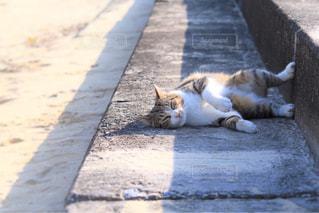 猫,動物,砂浜,昼寝,ペット,人物,癒し,浜辺,島猫,お昼寝中,ネコ,人懐っこい