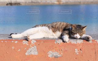 猫,風景,海,動物,昼寝,ペット,人物,浜辺,cat,のんびり,島猫,ネコ