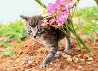 猫,花,動物,かわいい,フラワー,ペット,子猫,人物,flower,cat,キティ,ネコ
