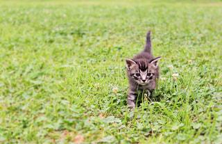 猫,公園,動物,ペット,子猫,人物,癒し,可愛い,cat,お散歩,アニマル,ネコ