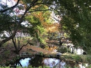 自然,風景,秋,紅葉,屋外,樹木,岩手県,城跡公園,盛岡市