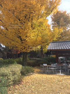 秋,紅葉,黄色,落ち葉,上野,銀杏,上野公園