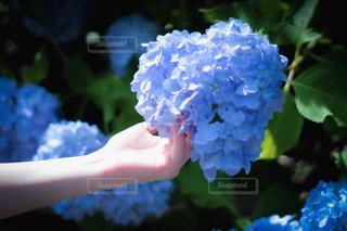 花を持つ手の写真・画像素材[2280022]
