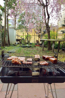 桜,木,庭,しだれ桜,花見,テーブル,肉,焼肉,バーベキュー,炭,コンロ