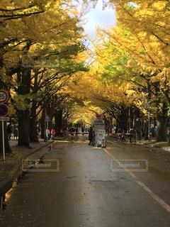 樹木,歩道,通り