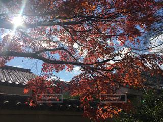秋,紅葉,京都,観光